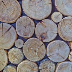cut logs, wood texture background