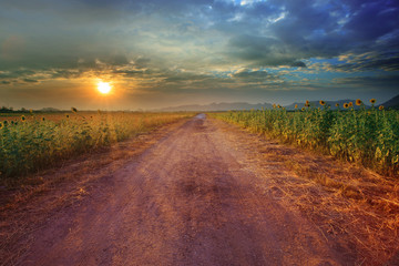 landscape of rural road perspective to sunflower farm field with