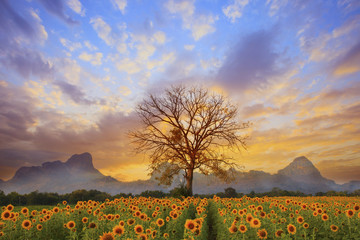 beautiful landscape of  tree branch and sun flowers field
