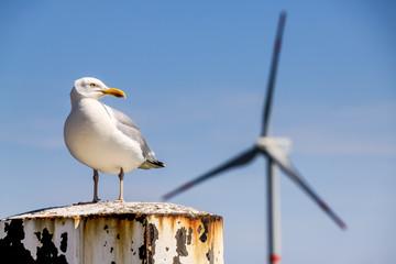 Offshore-Windkraftanlage und Möwe in Norddeutschland