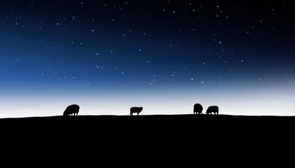 Schafge vor Nachthimmel