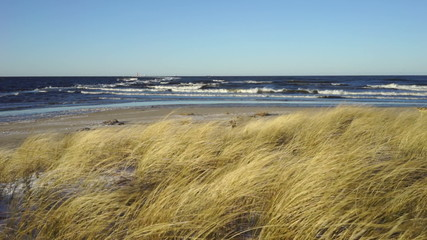 Grass under the force of the wind on the beach