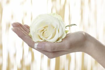 Frauenhand mit einer gelben Rosenblüte