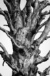 Unleave cutted tree. Black and white image
