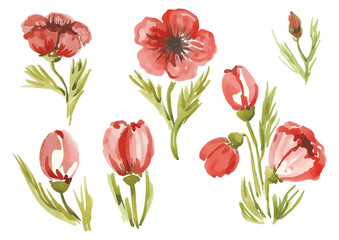 watercolor poppies in different styles