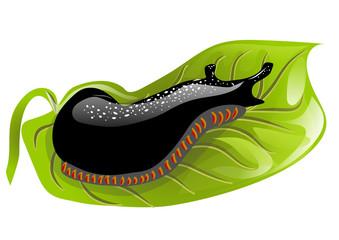 black slugs