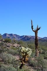 Dead Saguaro Desert Sky