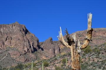 Dead Saguaro Mountain