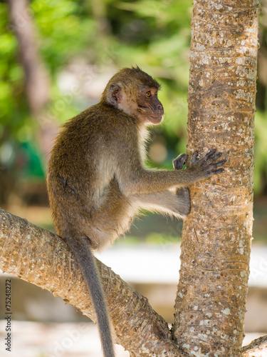 Poster Oceanië Monkey on the beach in Thailand