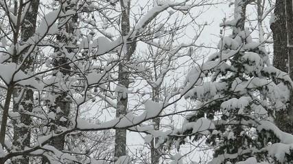 樹雪_10_ハイスピード撮影