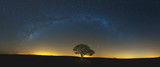 Fototapety Star scape with lone tree brown grass and Milky Way and soft lig