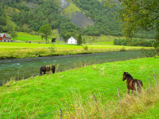 Norway, Flaam,green landscape with horses and the river