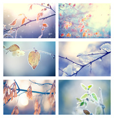 Frozen winter nature. Collage of winter floral backgrounds