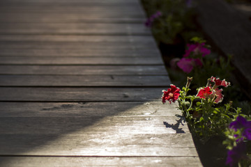 Flower in sunlight at a wooden footpath