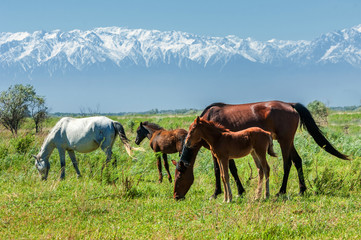 horse, dobbin, hack, hackney, nag, equine