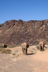 Elefanti nel deserto della Namibia