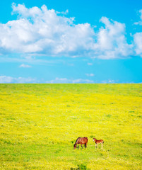 horse and foal under a cloudy sky