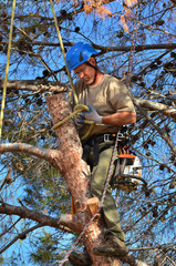 Man Tying a Knot on a Limb in a tree