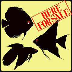 fish exotic sale sign