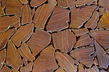 close up of tree stumps background