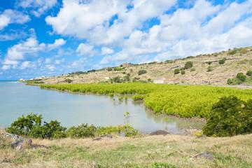 mangrove sur côte de l'île Rodrigues, baie malgache