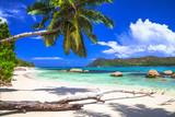 pure tropics. white sand, palm-tree, azure sea