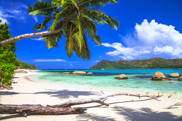 pure tropics. white sand, palm-tree, azure sea