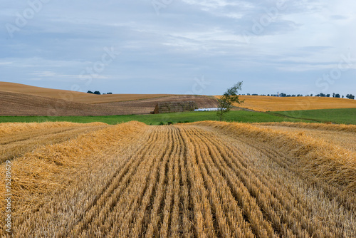 Krajobraz wiejski, po żniwach