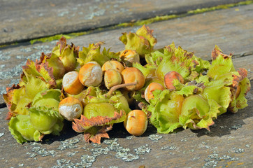 Hazelnuts 5