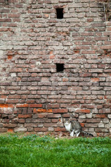 Old brick wall with green grass and cat