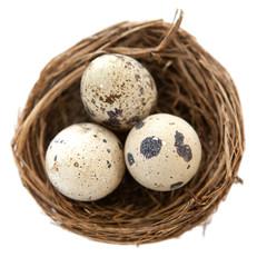 nid d'oiseau et oeufs de caille