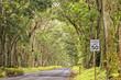 hawaii island forest tree ceiling road
