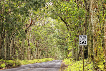 hawaii island forest tree ceiling road