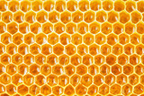 honeycomb cells natural background