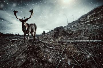 snowfall stag