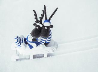 Elche auf einem Schlitten im Schnee