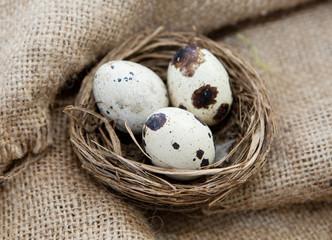 oeufs de caille dans un nid douillet