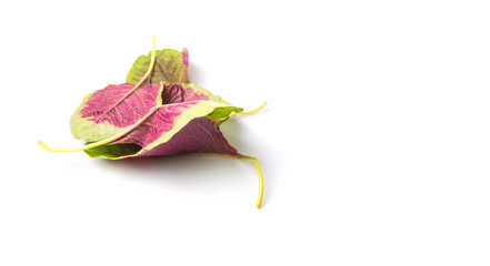 Chinese red spinach leaves over white background