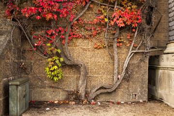 surviving tree
