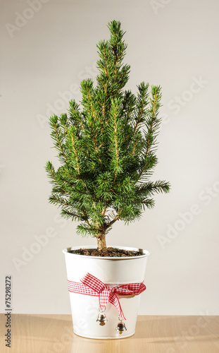 Foto op Canvas Bonsai Miniature potted Christmas tree on the table