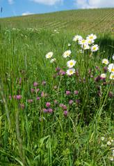 Wiesenblumen im Frühjahr