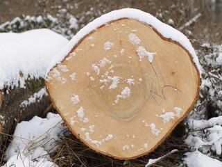 Baumstamm im Schnee