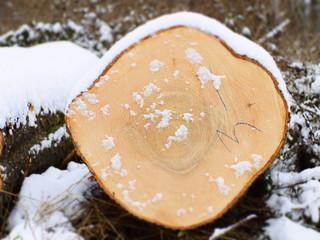 Schneebedeckter Baumstamm