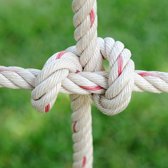 Rope hitching on public garden.