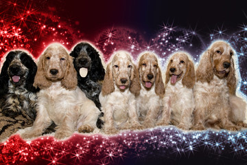 portrait of english cocker spaniel in abstract background
