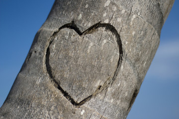 Heart Carved into a Palm Tree