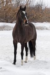 Horse walking in wintertime