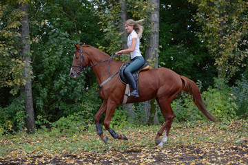 Horse and rider turning at dressage Event part
