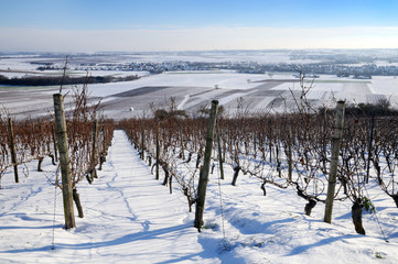 The vineyard in winter
