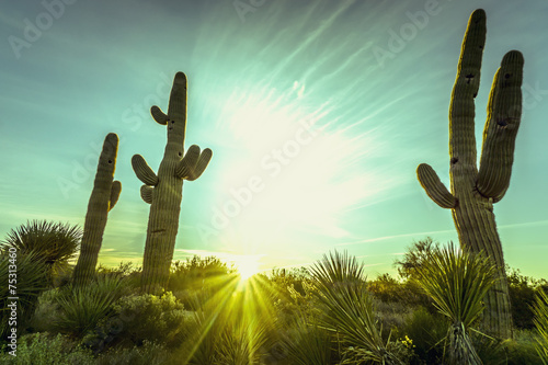 Desert sunrise in Scottsdale,Arizona - 75313460